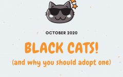 Black Cats! (and why you should adopt one)