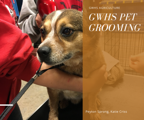GWHS pet Grooming: Meet Dango!